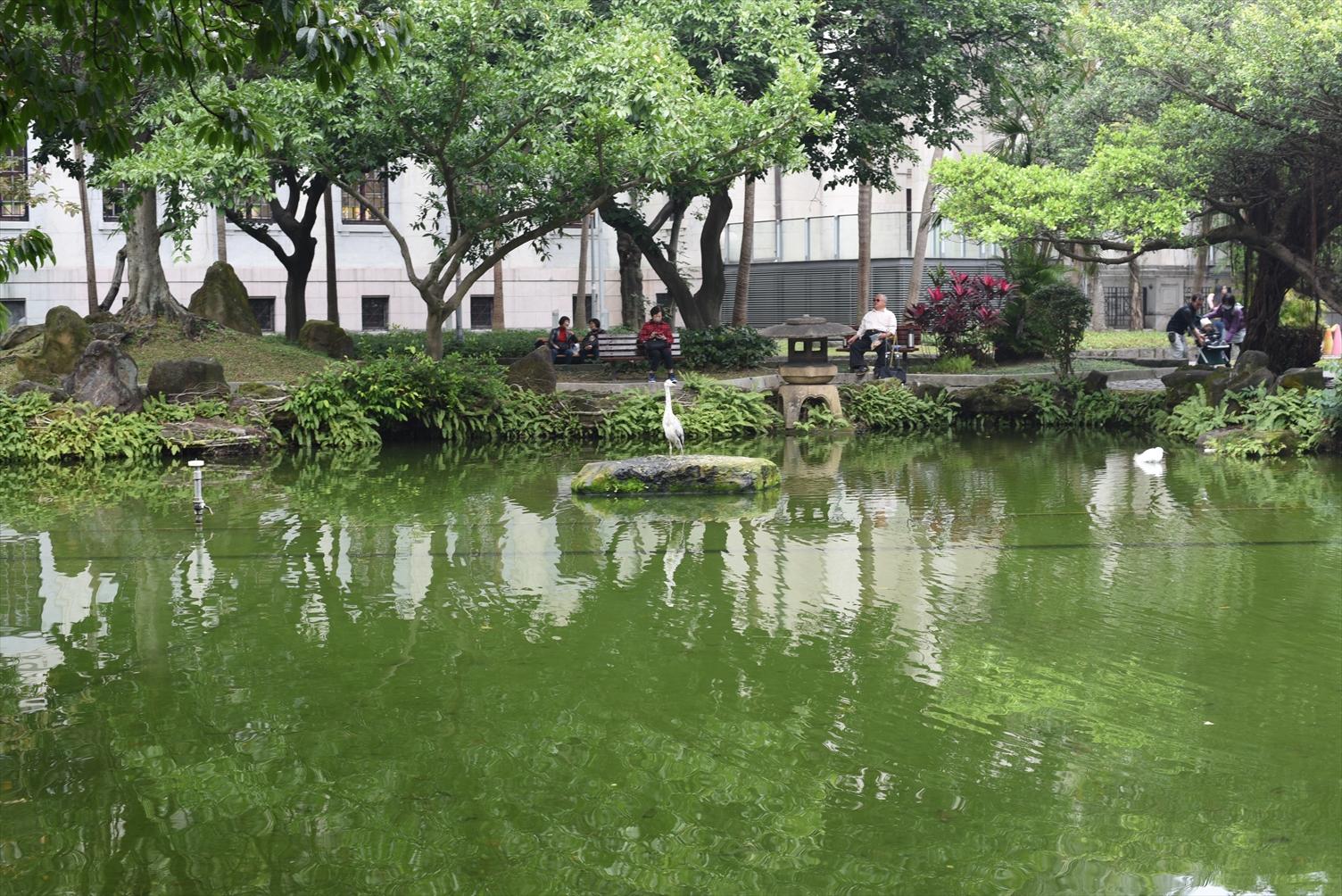 二二八和平公園 池 鳥