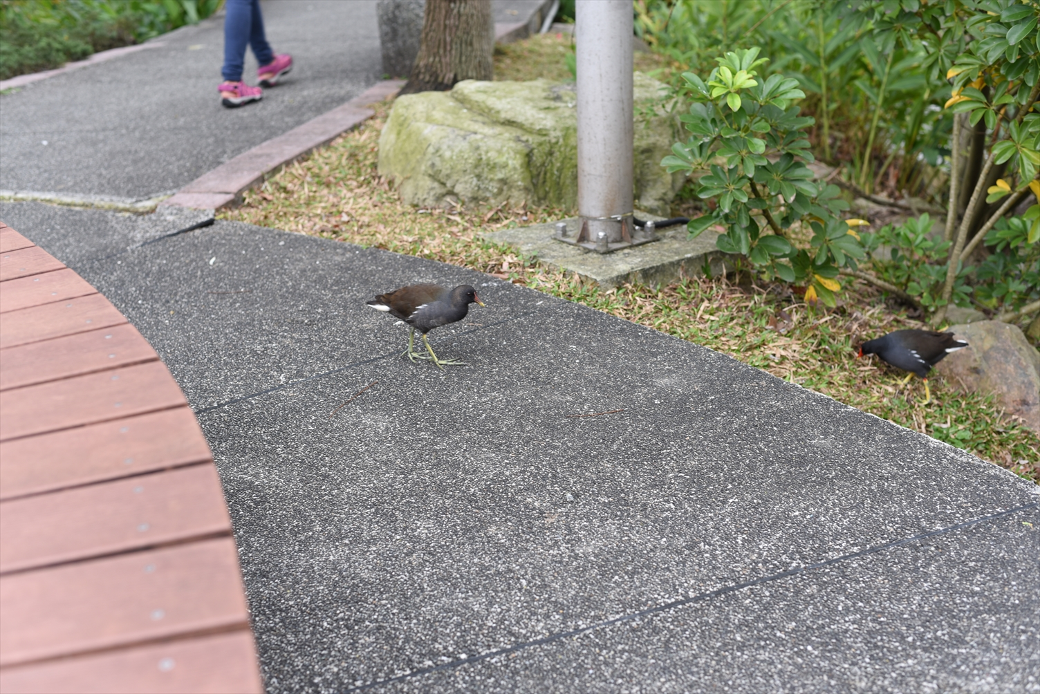 台湾大学 鳥