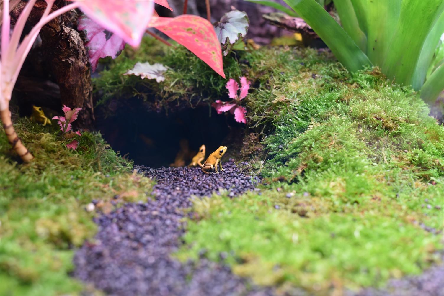 台北市立動物園 カエル