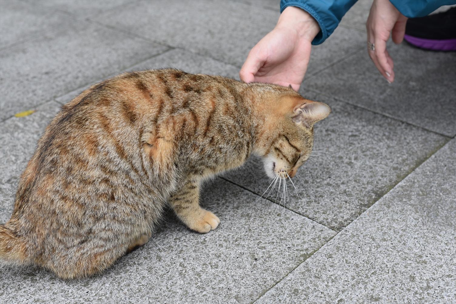 台北市立動物園 猫